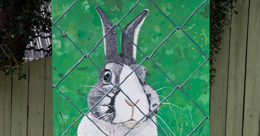 IMGP0303-Rabbit-FS1